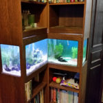fish tank built into oak bookcase